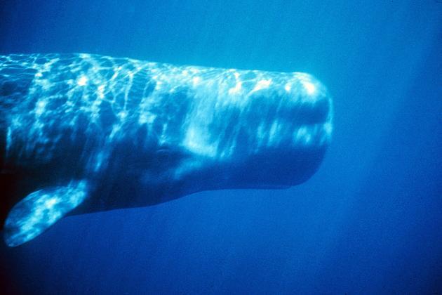 ballena en islas canarias