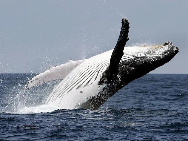ballenas en escocia