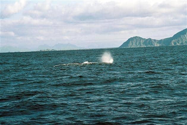 ballenas en noruega