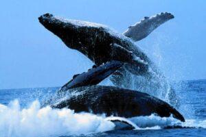 lugares de europa para ver ballenas