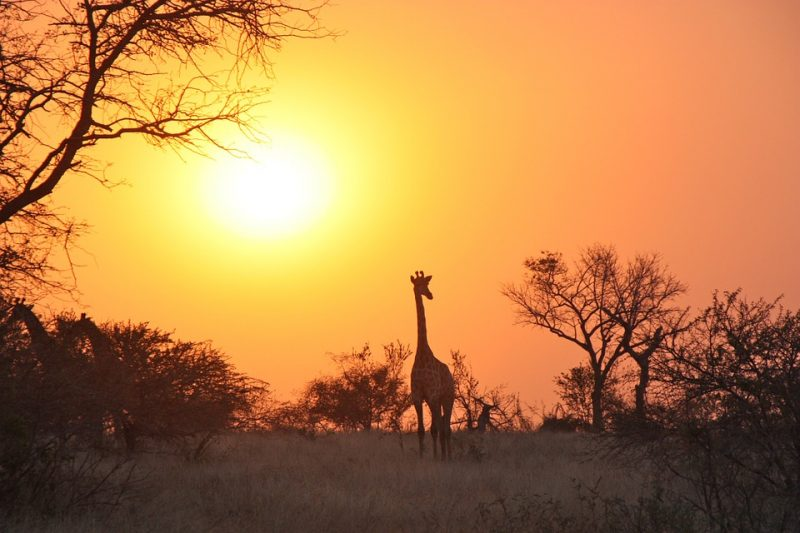luna de miel en zambia