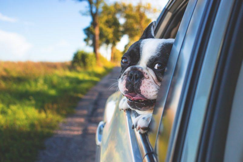 Consejos para viajar en coche con mascotas