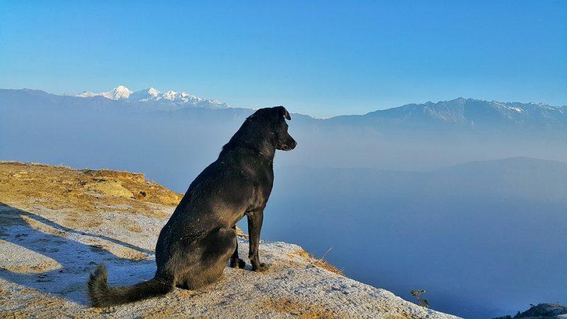 Consejos generales para viajar con mascotas