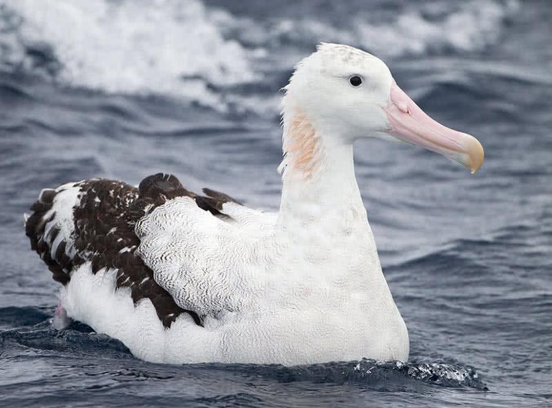 1603753918 320 Los 8 mejores animales antarticos asombrosos