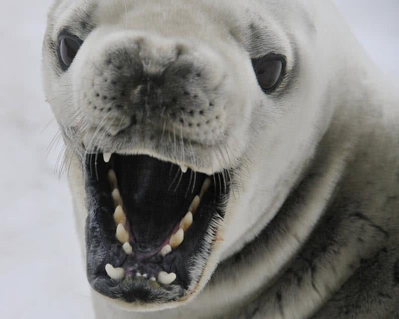 1603753918 794 Los 8 mejores animales antarticos asombrosos