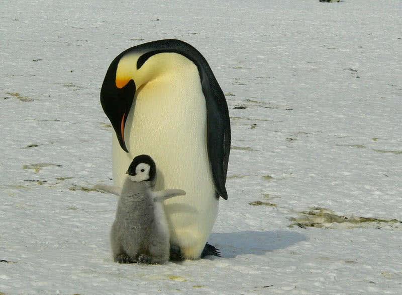 1603753919 222 Los 8 mejores animales antarticos asombrosos
