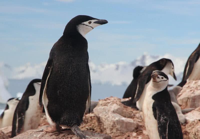 1603753919 54 Los 8 mejores animales antarticos asombrosos