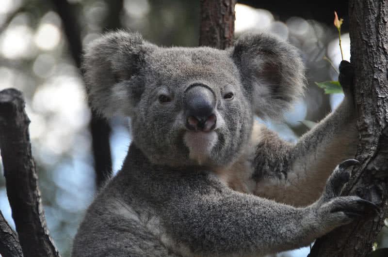 1603898282 913 Los 9 mejores animales australianos asombrosos