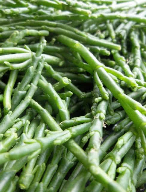 1604007491 307 Las 10 verduras menos conocidas del mundo