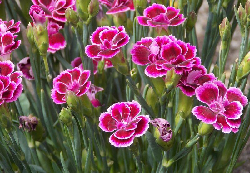 1604095403 760 Las 10 flores mas hermosas de los Estados Unidos