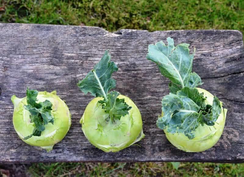 Las 10 verduras menos conocidas del mundo