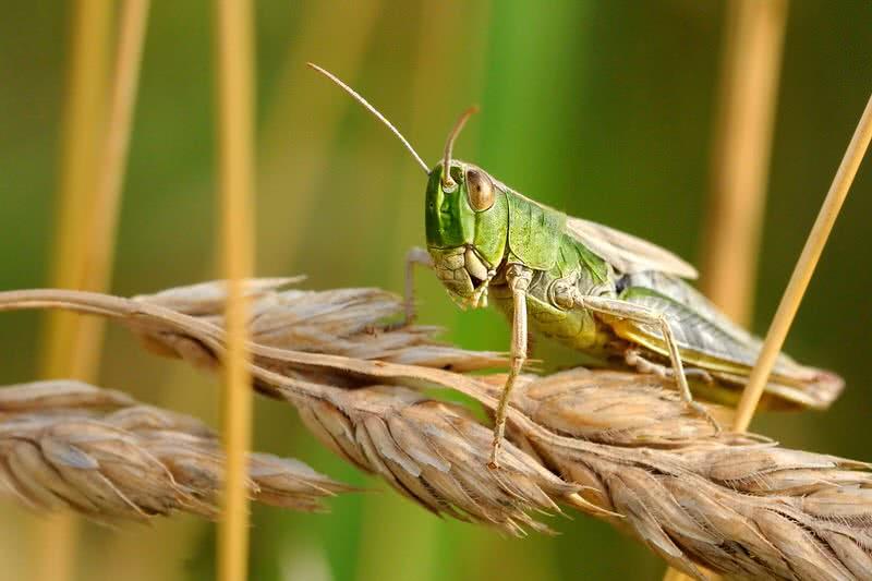 1604237674 689 Los 10 insectos mas molestos del mundo