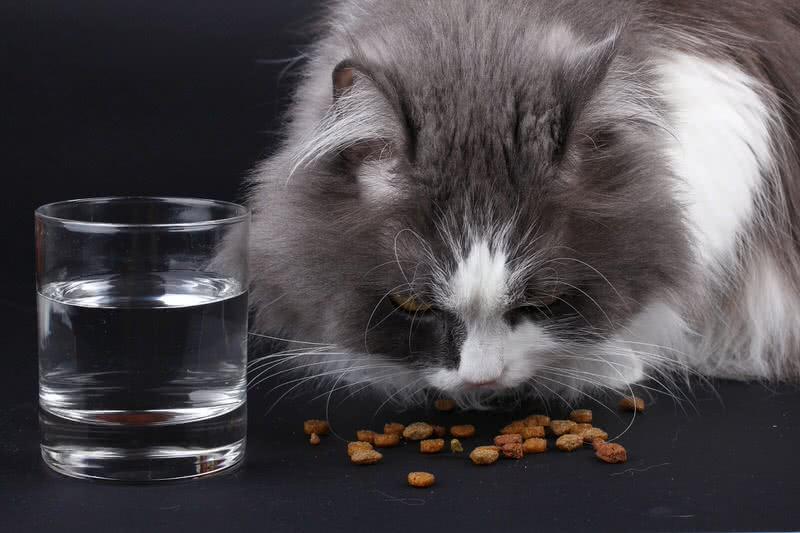 1604458186 8 alimentos que son malos para tu gato