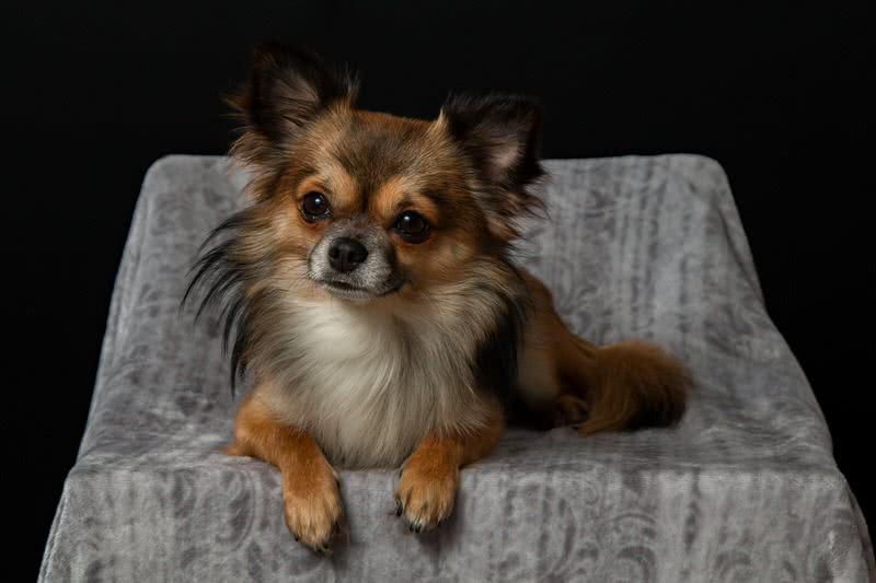 1604557856 646 10 mejores razas de perros para vivir en un apartamento