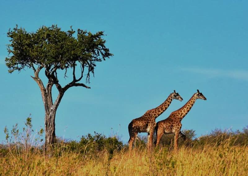 1604713265 783 9 destinos de vida silvestre mas asombrosos del mundo