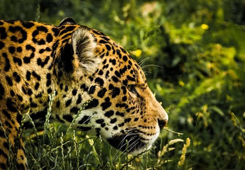 increíbles destinos de vida salvaje
