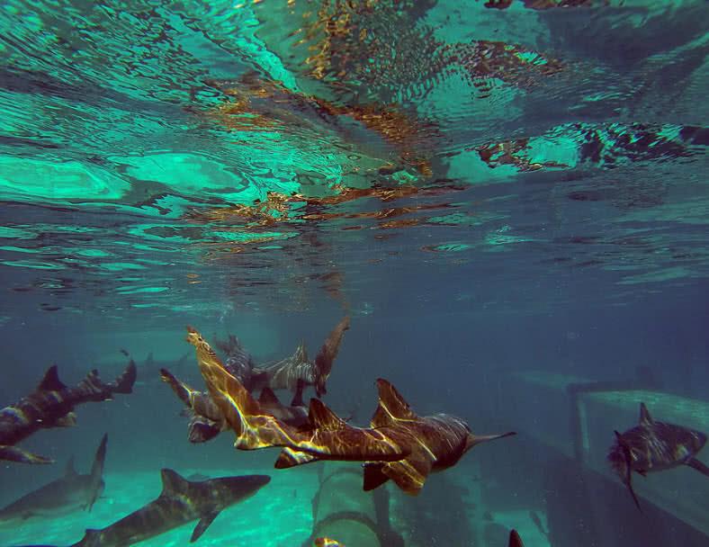 1604736063 627 Los 5 mejores lugares submarinos del mundo que debes ver