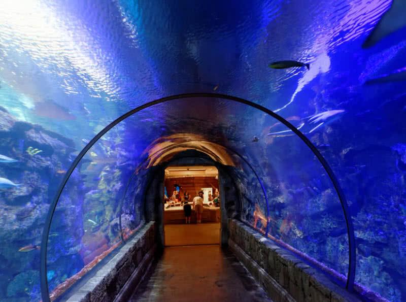 1604736063 73 Los 5 mejores lugares submarinos del mundo que debes ver