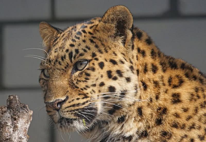 1604791337 596 9 animales que pueden desaparecer en un futuro