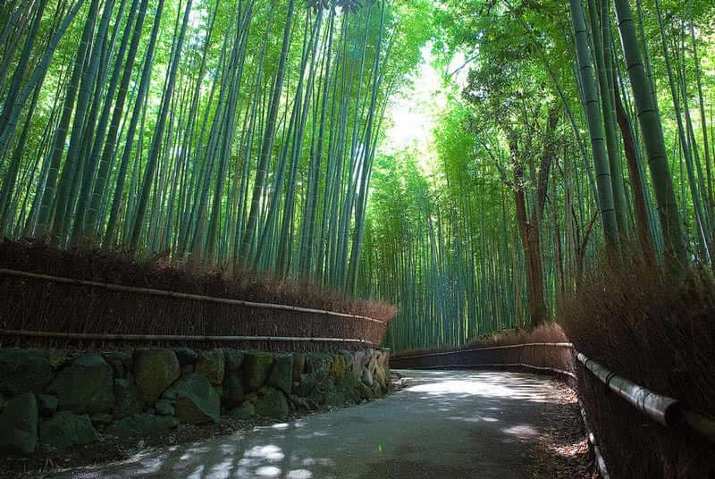bosque de bambú sagano