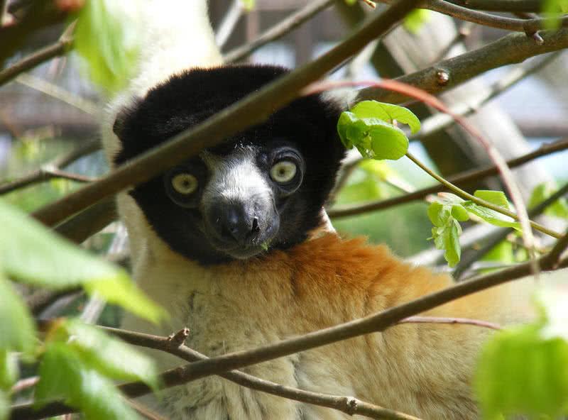 1605099533 569 10 animales asombrosos que se encuentran solo en Madagascar