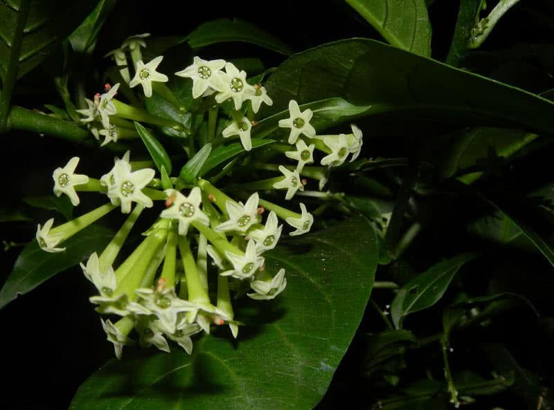 1605121226 797 Las 9 flores mas hermosas de la noche