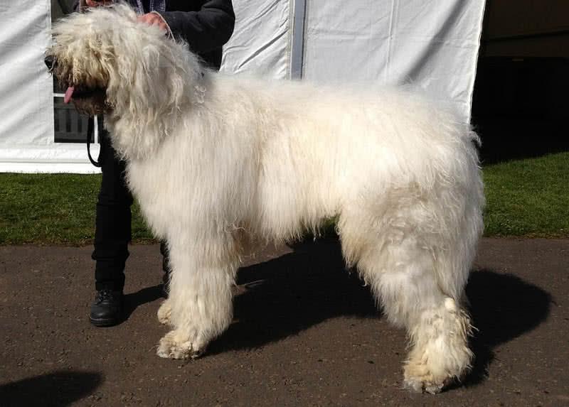 1605132064 540 Los 10 mejores perros guardianes para la seguridad