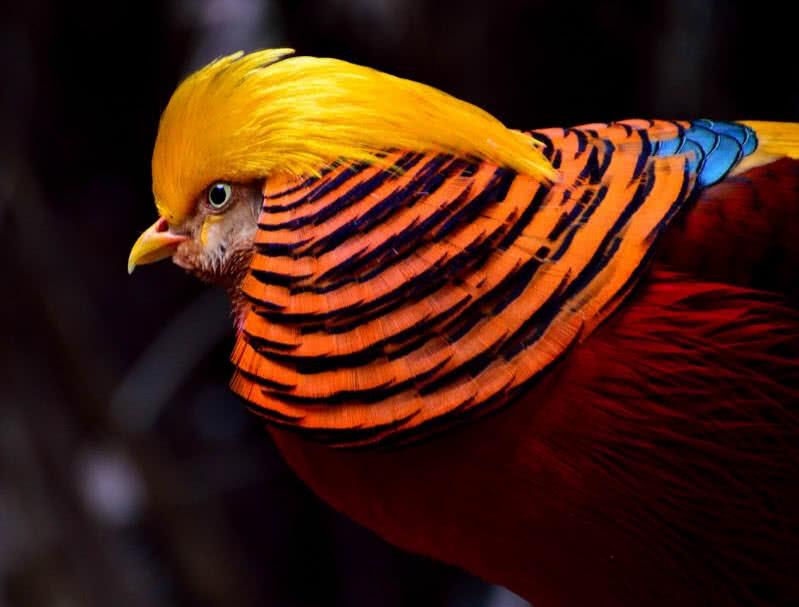 animales más coloridos