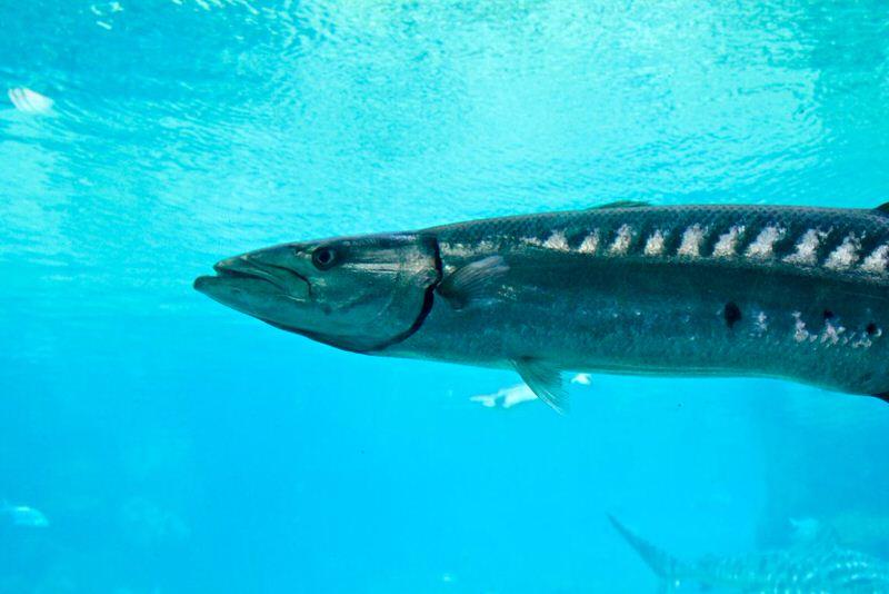 1605164629 179 Los 10 animales mas rapidos en el agua