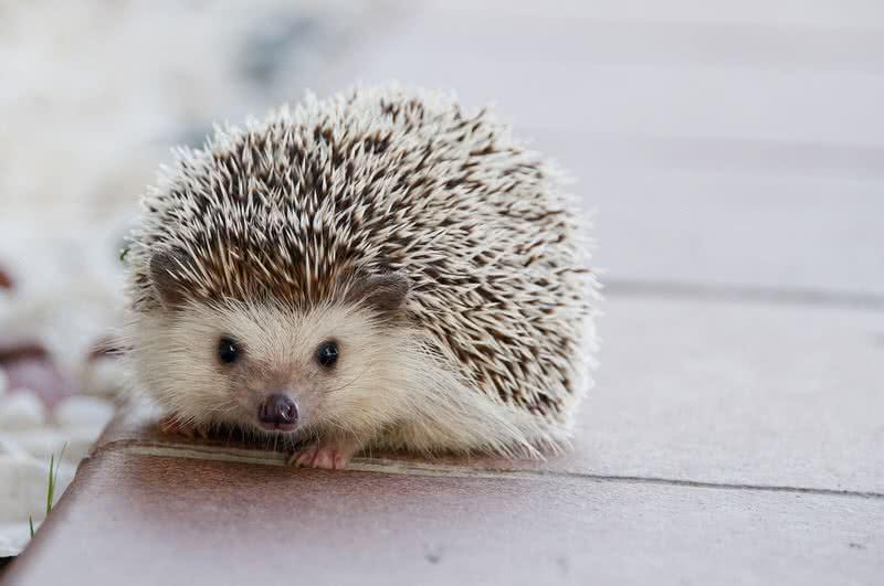 1605175640 48 Los 10 animales bebes mas lindos del mundo