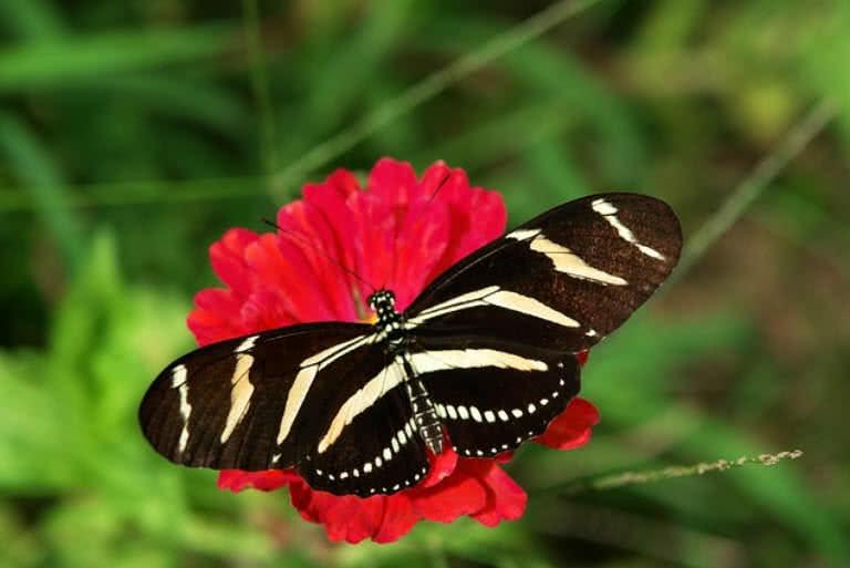 1605230560 239 10 mariposas mas inusuales y hermosas del mundo