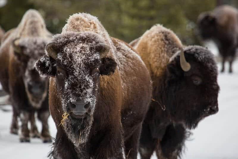 1605241701 745 10 animales asombrosos que se encuentran solo en America del