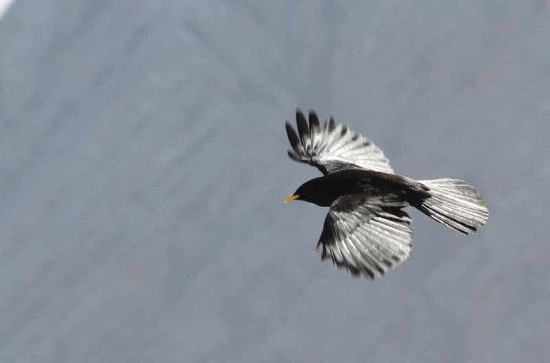 1605350811 849 Las 10 aves voladoras mas altas del mundo