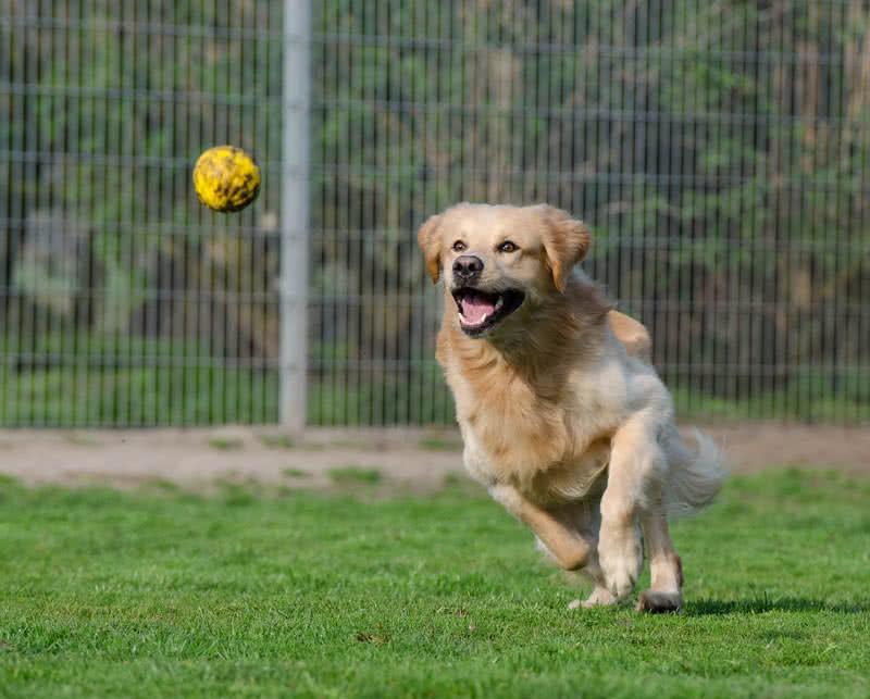 1605427810 483 Las 10 razas de perros mas hermosas