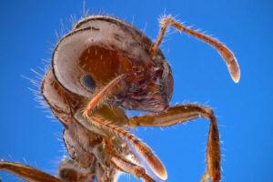 1605471953 453 Los 10 insectos mas mortiferos del mundo