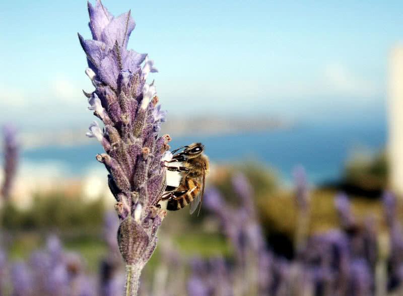 asesino de abejas