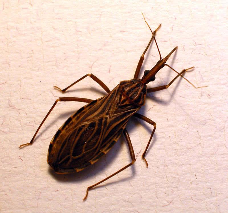 1605471953 679 Los 10 insectos mas mortiferos del mundo