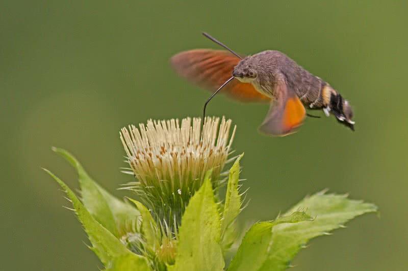 1605538530 208 Los 10 insectos mas extranos del mundo