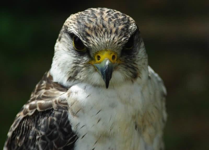 Las 10 Aves Más Rápidas Del Mundo Club De Turismo Digital
