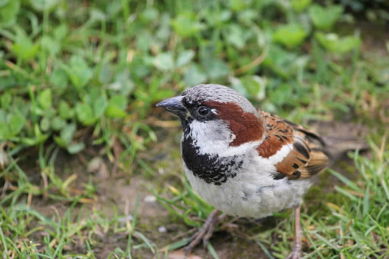 1605659293 473 Las 10 mejores aves que cantan del mundo