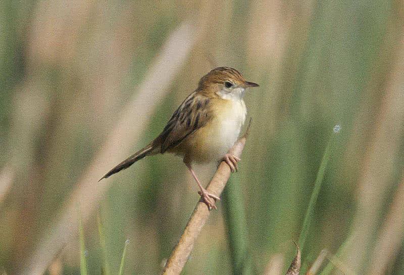 1605691942 352 Las 10 aves mas pequenas y lindas del mundo