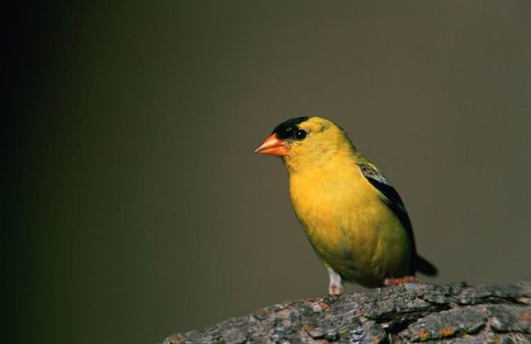 1605691942 912 Las 10 aves mas pequenas y lindas del mundo