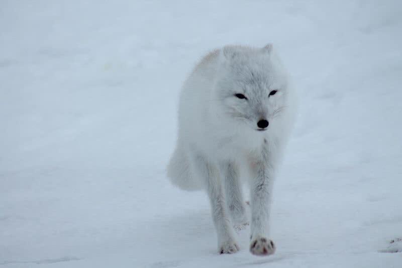 1605824564 833 7 asombrosos animales que cambian de color en el mundo