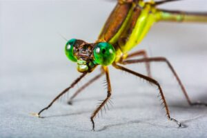 1605868197 268 Los 10 ojos mas asombrosos del reino animal