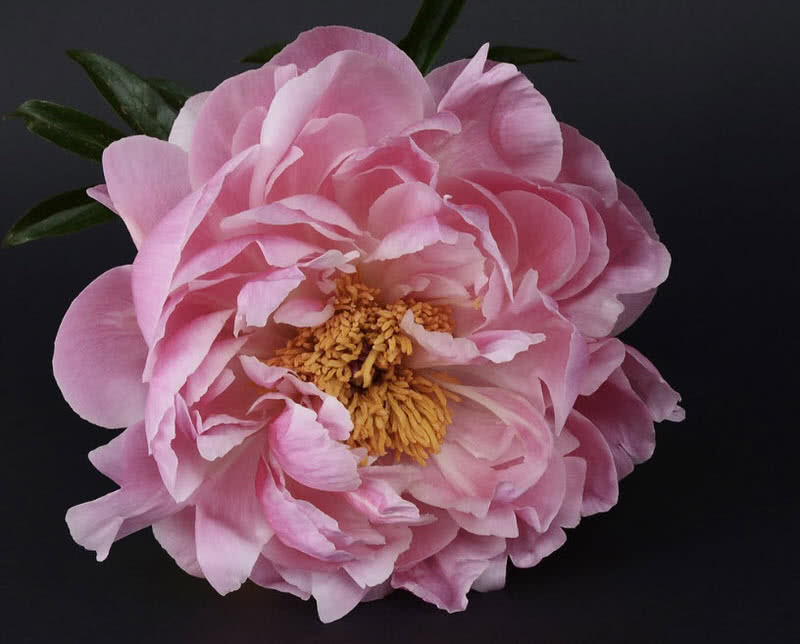 1605911807 142 Las 10 mejores flores para bodas del mundo