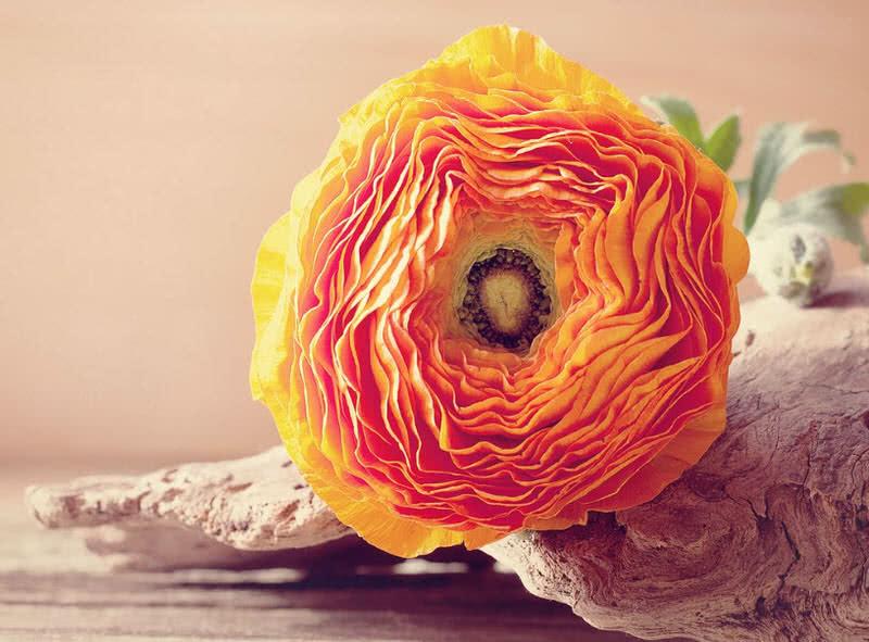 1605911807 467 Las 10 mejores flores para bodas del mundo