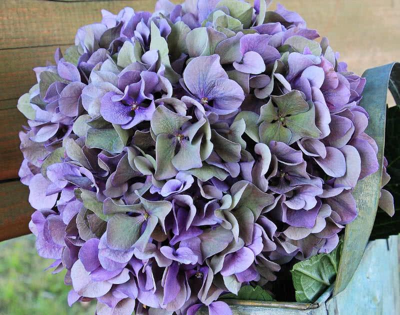 1605911807 854 Las 10 mejores flores para bodas del mundo