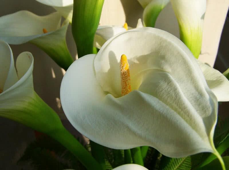 1605911808 994 Las 10 mejores flores para bodas del mundo