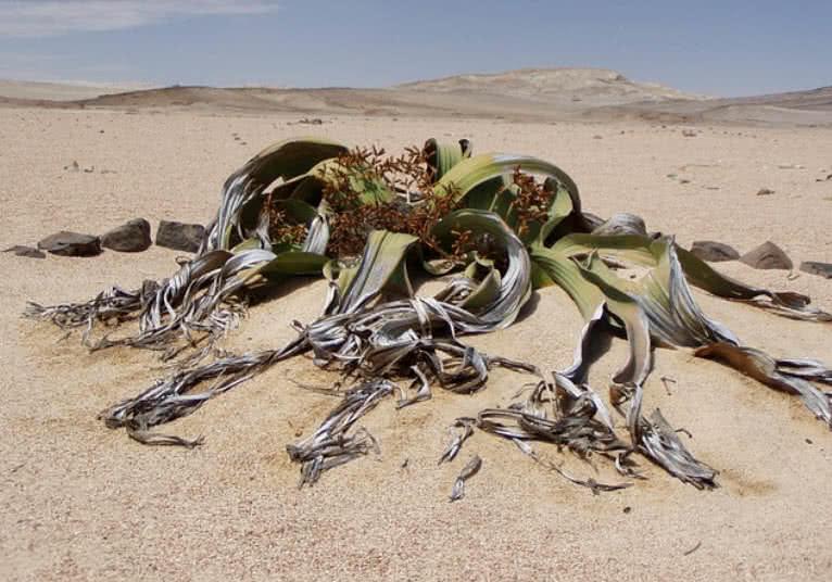 1606010521 8 Las 9 plantas del desierto mas misteriosas