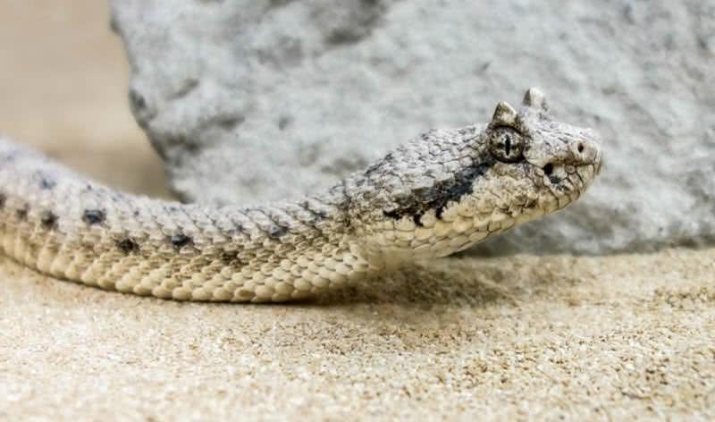 1606086798 247 Los 10 animales del desierto del Sahara increiblemente adaptables